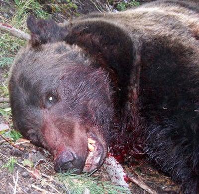 httpswww.outdoorlife.comsitesoutdoorlife.comfilesimport2013images200810bear_attack_02_0.jpg