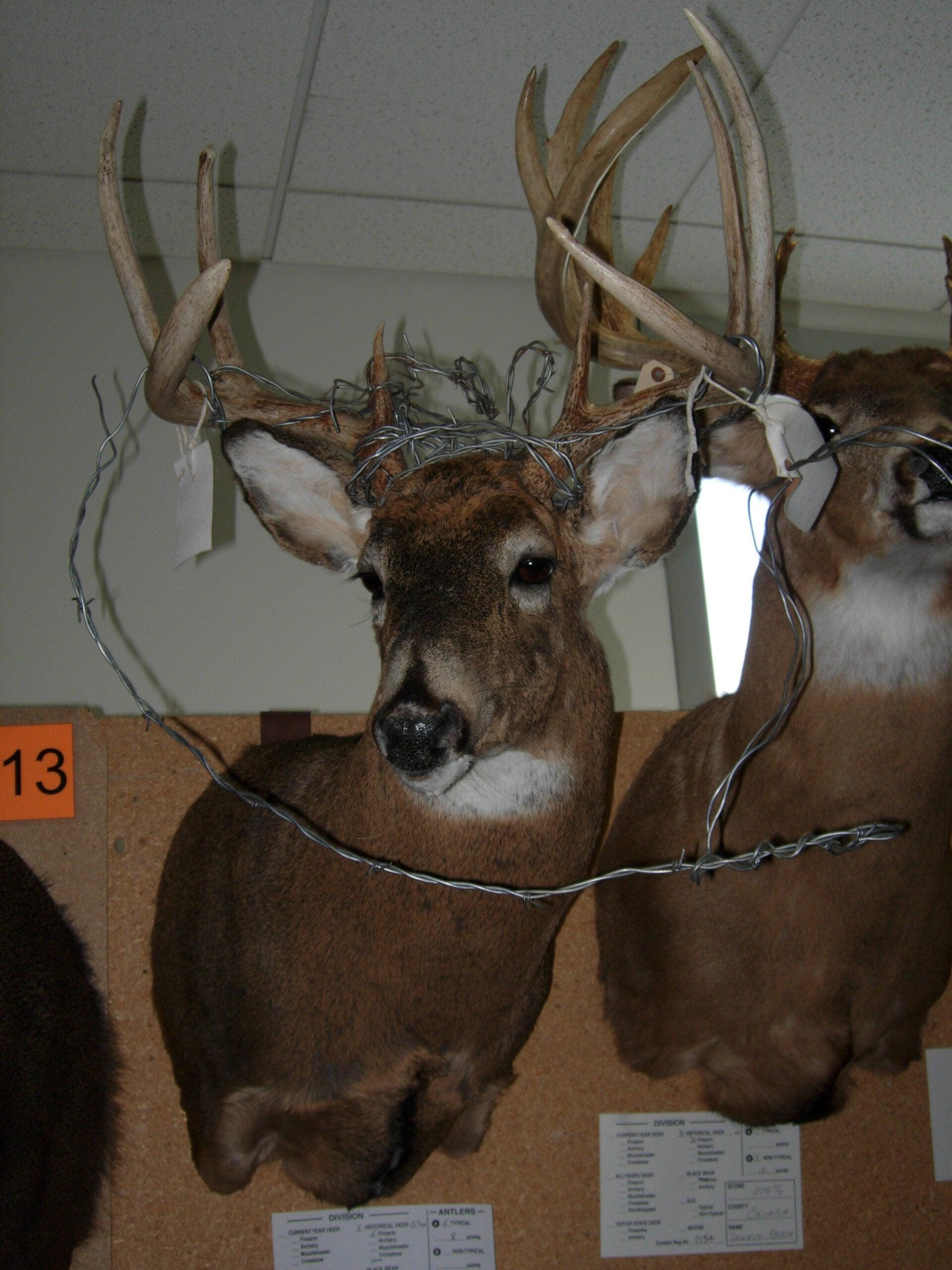 Barbwire Bucks