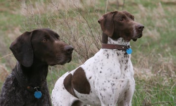 How to Feed Your Hunting Dog