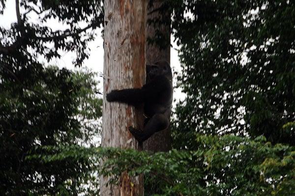 httpswww.outdoorlife.comsitesoutdoorlife.comfilesimport2013images201006C_12_0.jpg