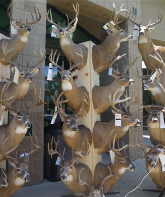 Two Texas Brothers Busted in Biggest Trophy Deer Poaching Case in Kansas History