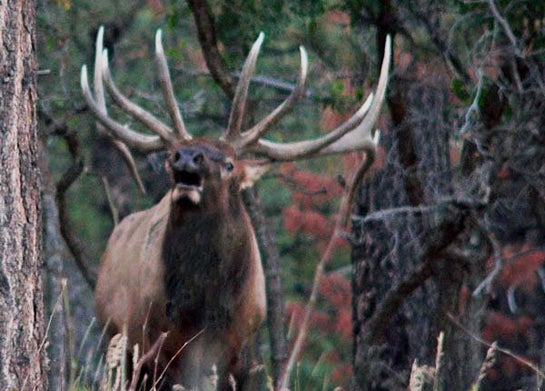 Bowhunting Tips: When to Take a Frontal Shot