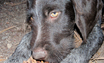 Disobedient Dog? Pick Up Your Hunting Dog for Better Behavior