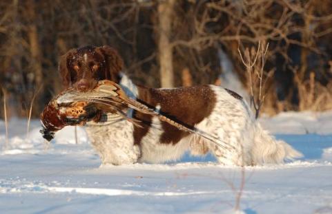 httpswww.outdoorlife.comsitesoutdoorlife.comfilesimport2013images20110419_Gunnar_Dec_09_0.jpg