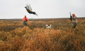 Top Shots: The Best Loads for Upland Birds