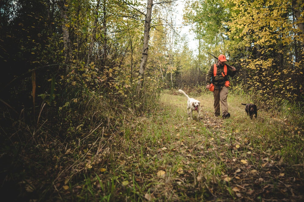 hunting dogs and hunter in the woods