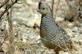 """""""quail"""""""