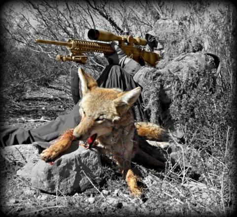 httpswww.outdoorlife.comsitesoutdoorlife.comfilesimport2014importImage2013photo1001321579bestcoyotes_14.jpg