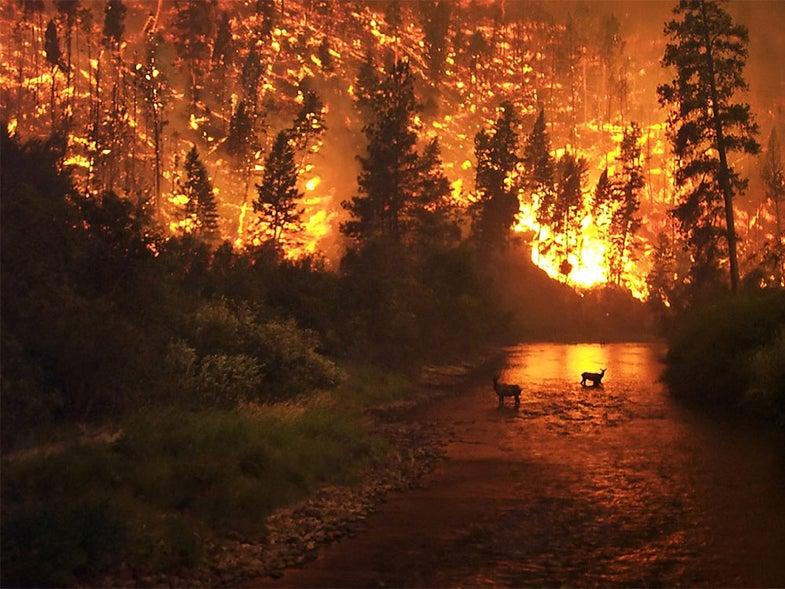 deer forest fire