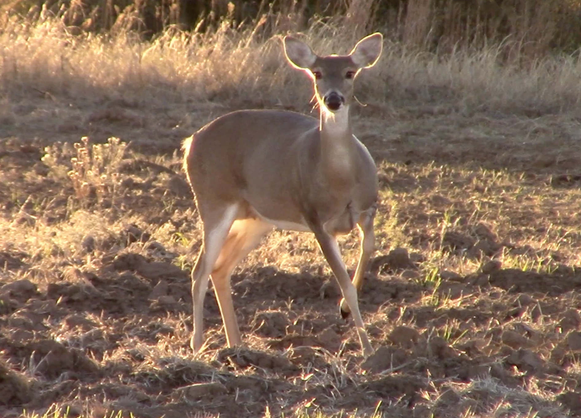 Why Deer Hunters Should Never Wear Blue Jeans, and Other Important Facts About Deer Vision
