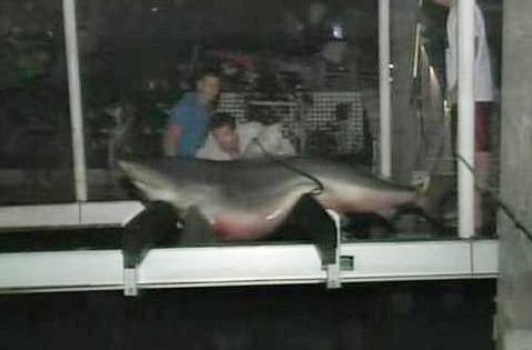 Florida Anglers Land 12-Foot Bull Shark