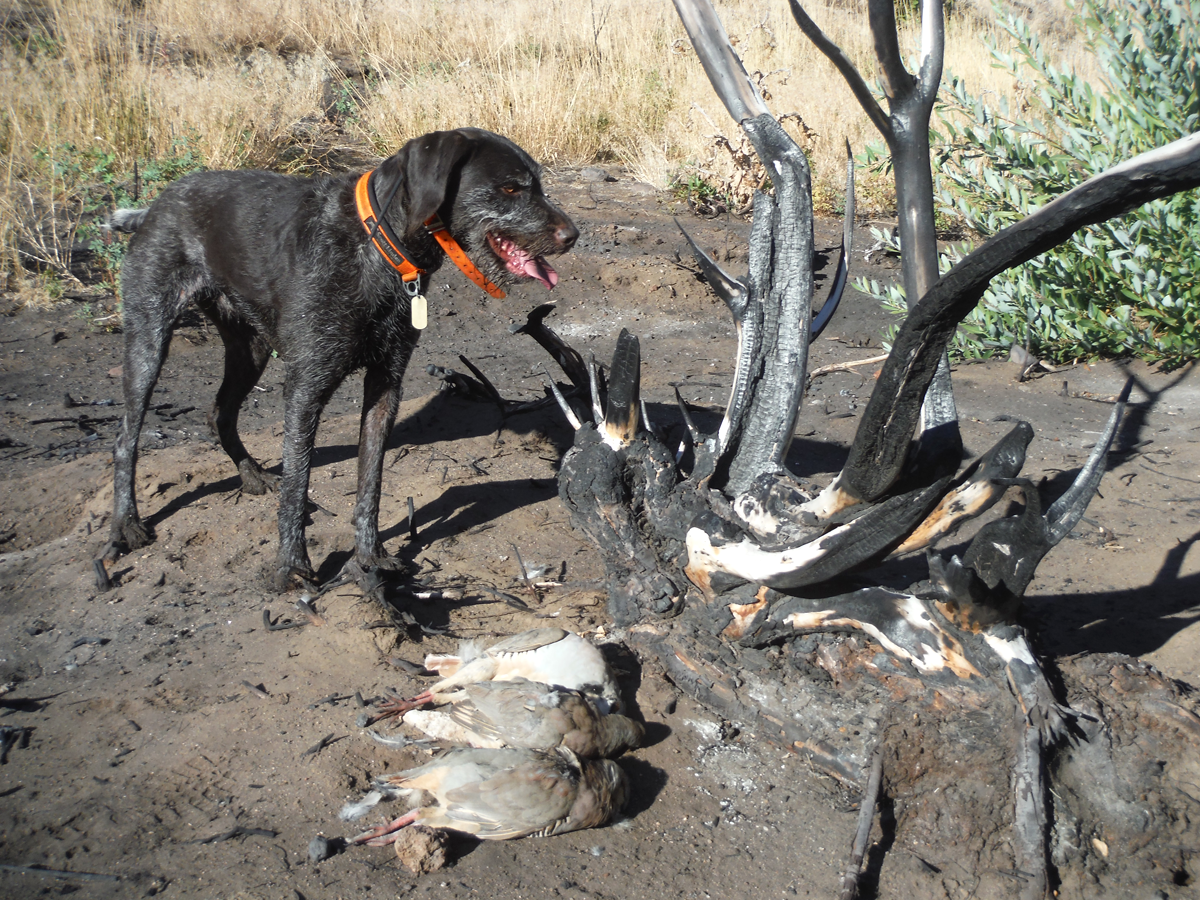 Upland Hunting: Why You and Your Gun Dog Shouldn't Be Deterred by Crappy Conditions