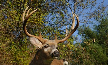 How to Profile and Hunt 4 Different Types of Bucks