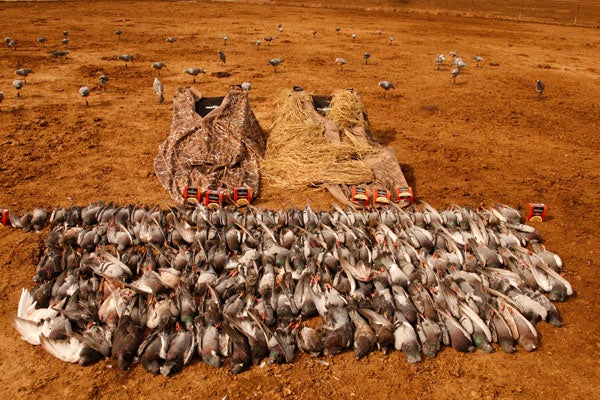 httpswww.outdoorlife.comsitesoutdoorlife.comfilesimport2013images201202pigeonshooting_09.jpg