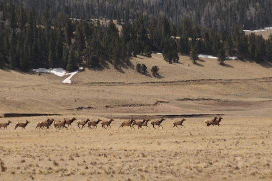 Win a World-Class Elk Hunt