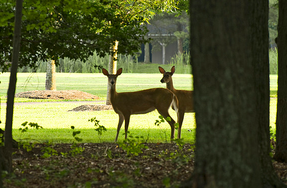 Urban Deer Hunting Dilemma