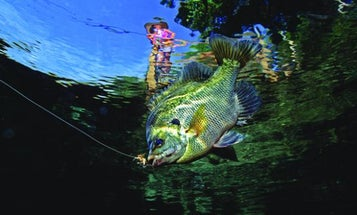Bluegill Fishing Tips for Catching Monsters