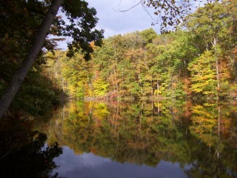 httpswww.outdoorlife.comsitesoutdoorlife.comfilesimport2014importImage2009photo7Decfoliage_67.jpg