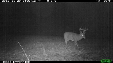 The Rut Tracker 2012: Rut Winding Down, Time to Target Food Sources