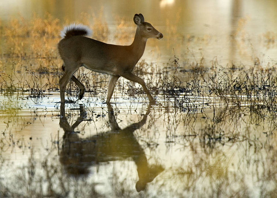 Whitetail Tips: Enter Special Draw Hunts Now!