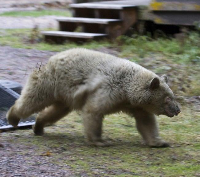 httpswww.outdoorlife.comsitesoutdoorlife.comfilesimport2014importImage2009photo7Glacier_Park_Release.jpg