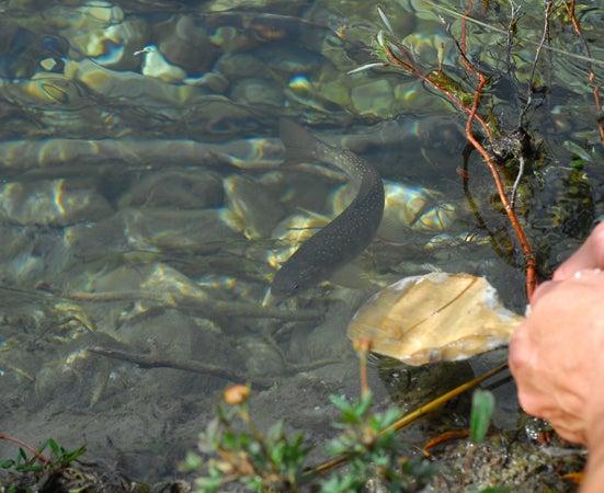 httpswww.outdoorlife.comsitesoutdoorlife.comfilesimport2013images20101012_Yukon3L_0.jpg