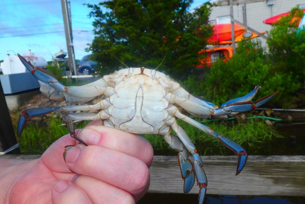 """""""crab,"""