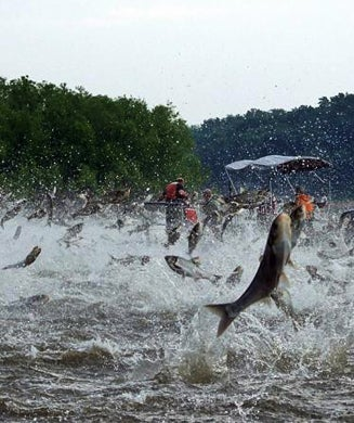 Signs of the Apocalypse: 15 Weird Animal Invasions