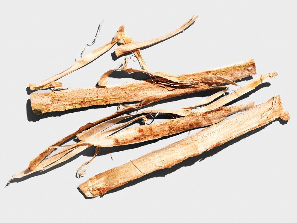 survival tip eat bark
