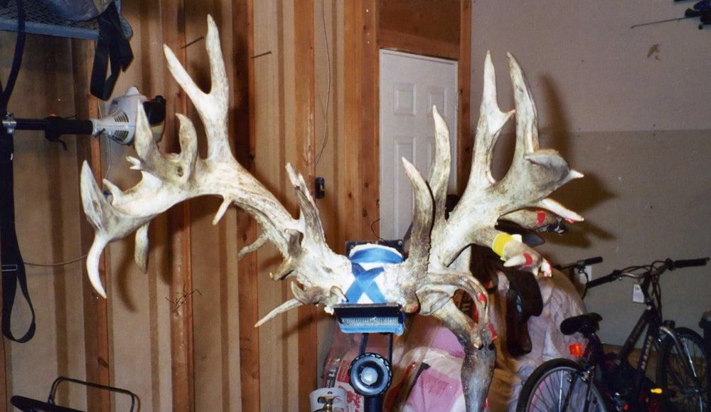 Lovstuen Iowa buck