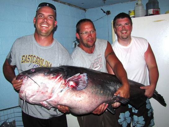 North Carolina Man Lands Potential World Record Blue Catfish