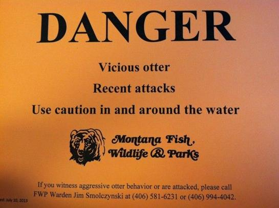 Wildlife Warning: 'Vicious Otter' on the Loose in Montana