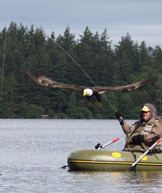 Photos: Bald Eagle Robs Trout Fisherman