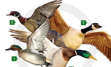 Best Duck Loads: How to Pick the Right Shell for the Right Bird