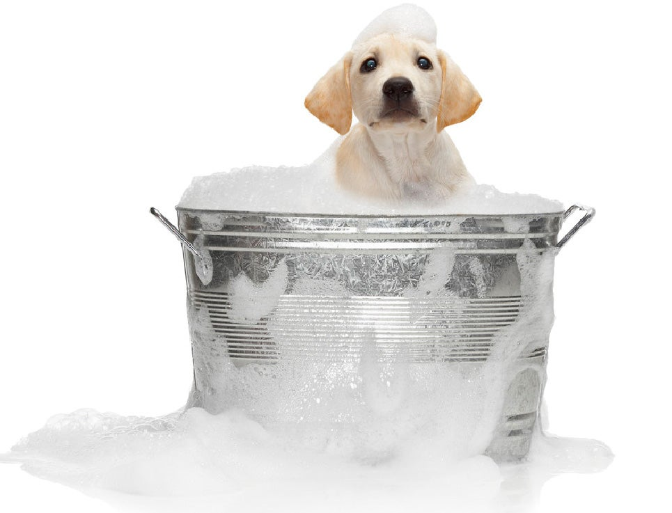 Does Your Dog Need a Bath?