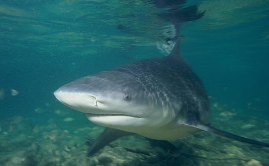 Researchers Try to Redefine 'Shark Attack' With New Study