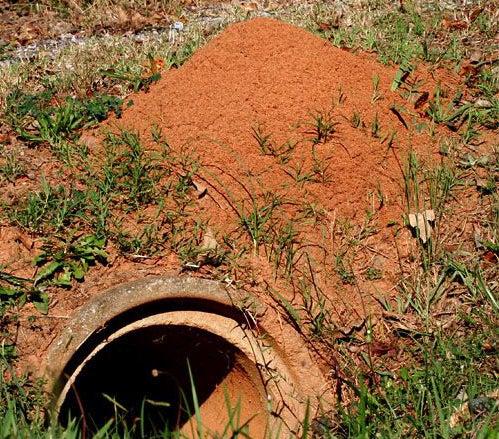 httpswww.outdoorlife.comsitesoutdoorlife.comfilesimport2014importImage2009photo7Bad_bugs_2_0.jpg