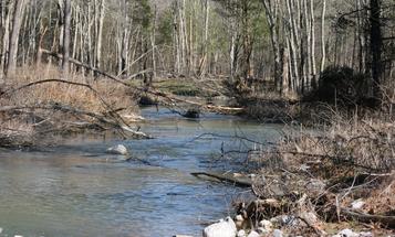 Hatchery Creek: A Man-Made Trout Paradise?