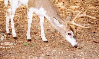 Have You Seen These Deer Diseases In Your Local Woods?