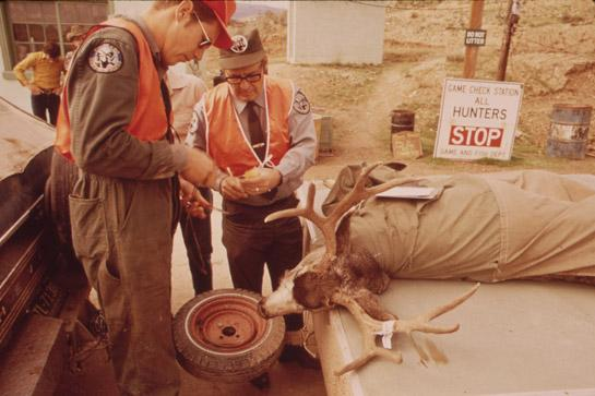 Telecheck Deer: The Way of the Future or a Missed Opportunity?