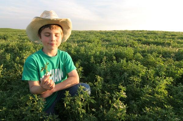 Food Plots: Keep it Simple, Plant Clover or Alfalfa