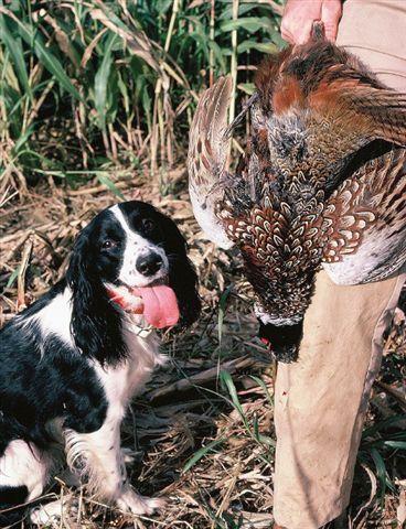 httpswww.outdoorlife.comsitesoutdoorlife.comfilesimport2014importImage2009photo716._Ohio.jpg