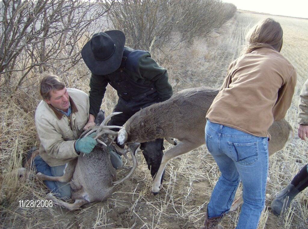 httpswww.outdoorlife.comsitesoutdoorlife.comfilesimport2014importImage2009photo30010Deer_at_Paces_Farm_005_0.jpg