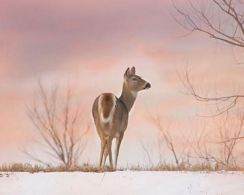 httpswww.outdoorlife.comsitesoutdoorlife.comfilesimport2014importImage2009photo624._sunset_Gretchen_Mueller_Steele_0.jpg