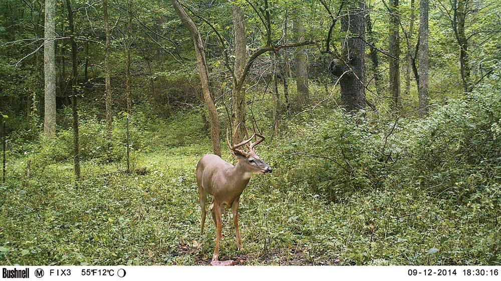 deer of the year buck hunting