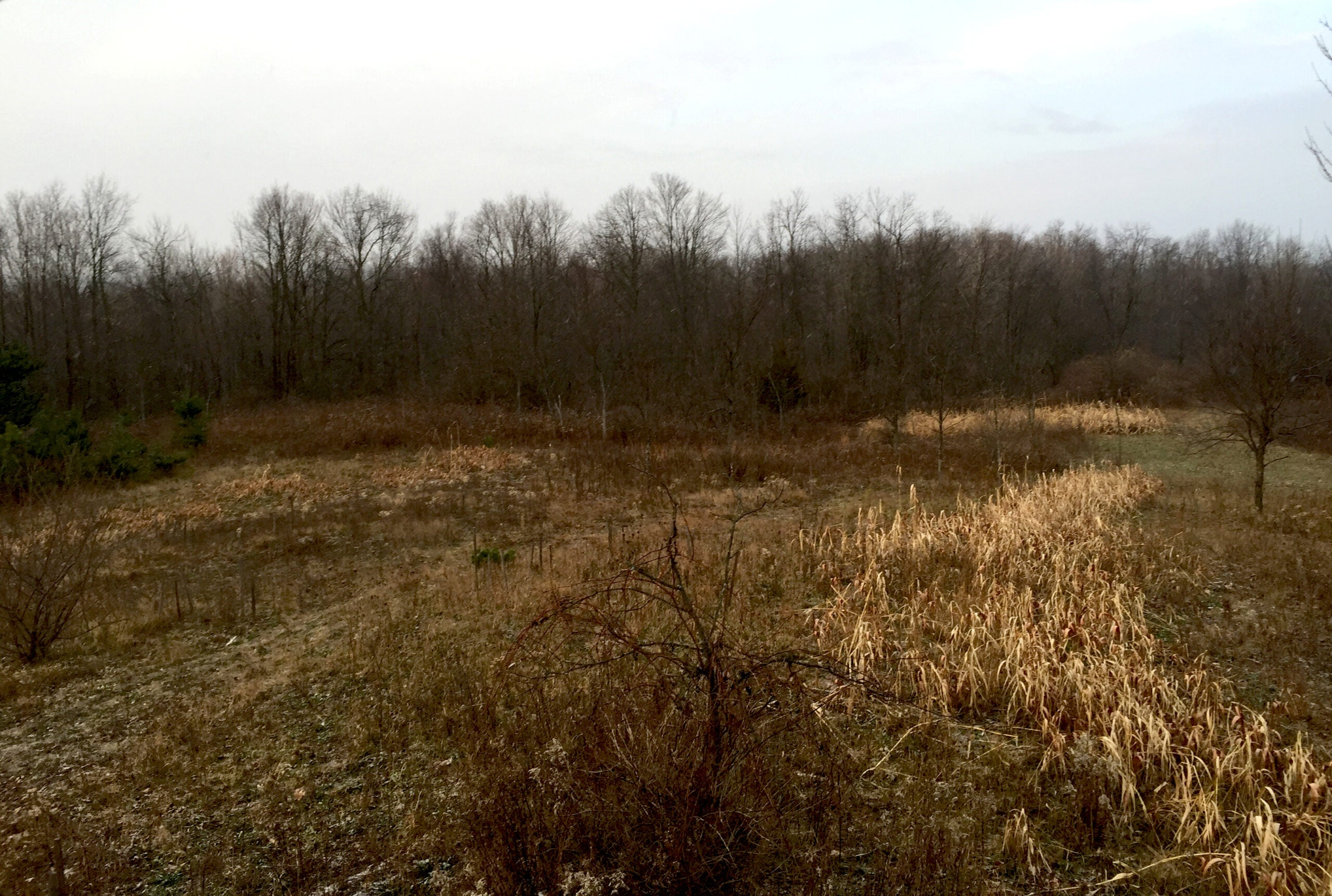 Micro Manager: Taking Inventory of Food and Cover for Whitetails