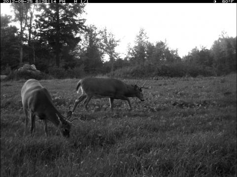The Rut Tracker 2012: Late-Summer Feeding Pattern Continues