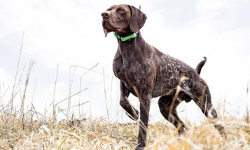 6 of the Greatest Modern Hunting Dog Stories