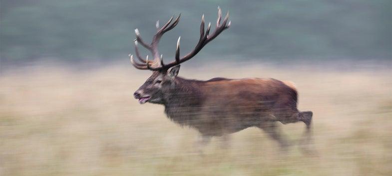 elk running through a field