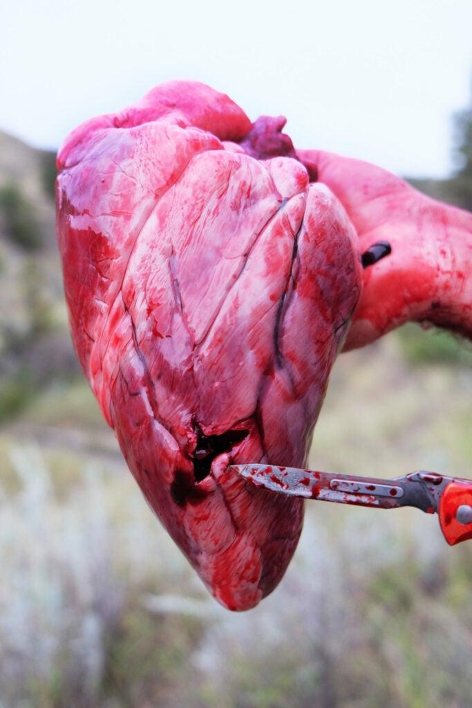 """""""elk-heart"""""""